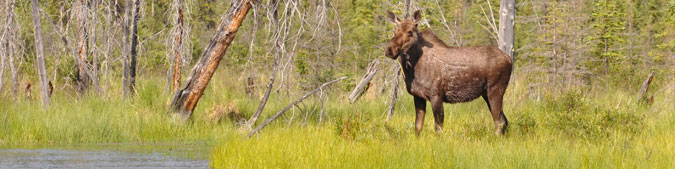 Moose Population Inventory