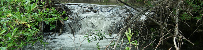 Ta'an Kwäch'än Council Salmon Stewardship Program