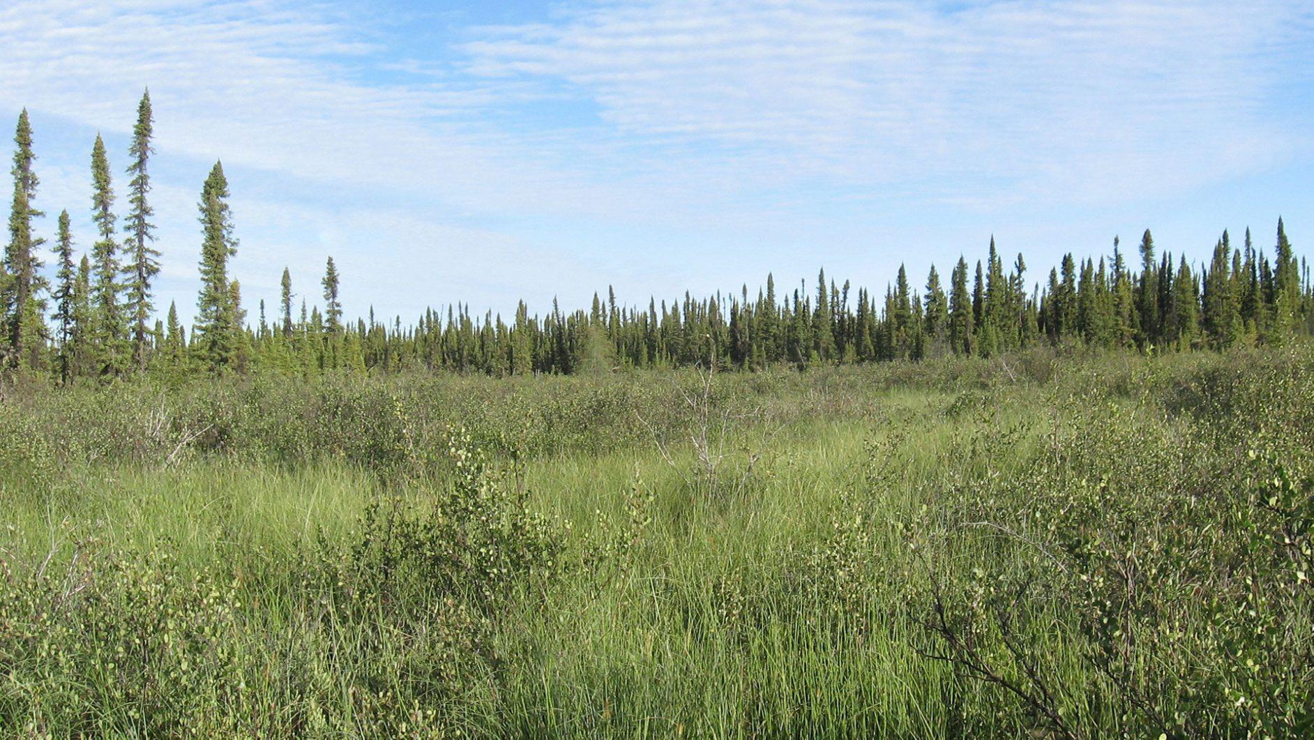 Boreal Caribou Habitat